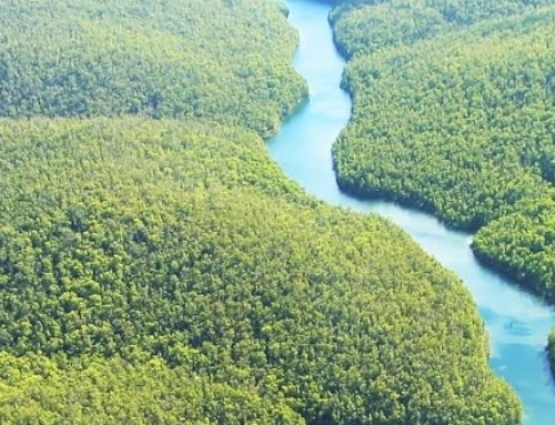 Educação Infantil – Dia da Amazônia